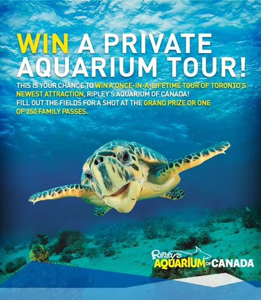 Ripley 39 S Aquarium Of Canada Ticket Giveaway