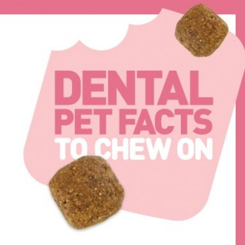 Royal Canin Dental Pet Facts to Chew on Contest