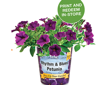 Home Depot Viva Rhythm Blues Petunias Coupon Deals