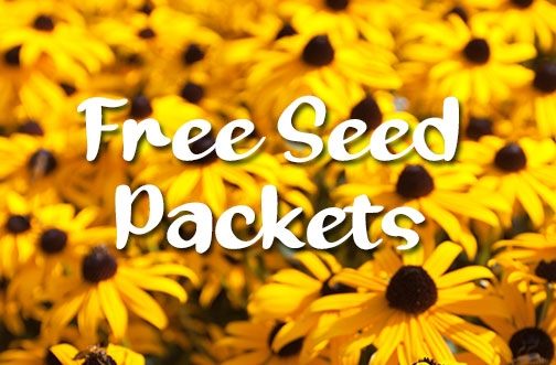 Free Black-eyed Susan Seed Packets