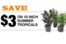 Home Depot Summer Tropicals Coupon