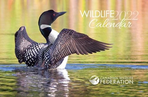 Free Canadian Wildlife Federation Calendar 2022