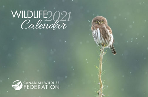 Free Canadian Wildlife Federation Calendar 2021