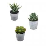 Artificial Succulents Set of 3